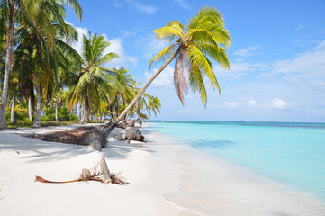 The most beautiful lonely beach in San Blas island, Panama. Cent