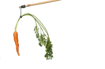 dangle a carrot on a stick as an incentive