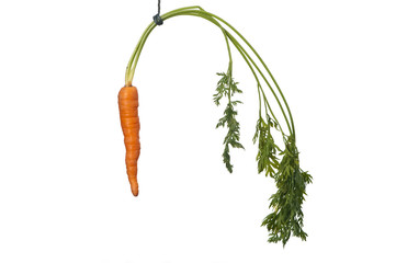hang a carrot in front of their noses