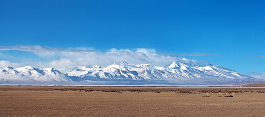 Panorama of Mountain landscape and drove of Kiangs in Tibet