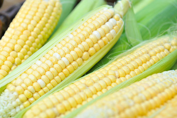 Fresh corn cobs, close-up