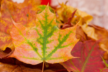 Autumn leave
