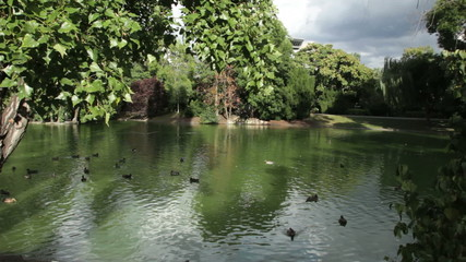 Ducks in the pond, stadtpark, Vienna