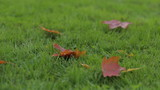 falling autumn leaves on grass, shallow depth of field