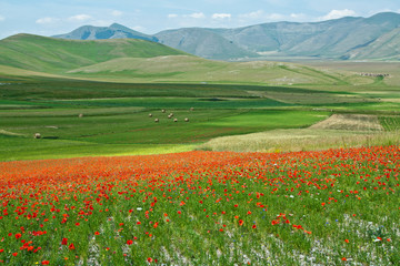 Landscape of the plain of Castelluccio, in Italy