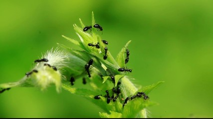 ants perched on the leaves