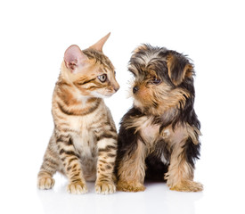 tiny little kitten and puppy looking at each other. isolated