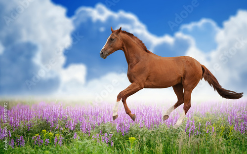 Horse on green field