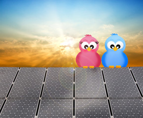 birds on the solar panel