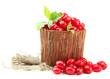Fresh cornel berries in wooden vase, isolated on white