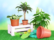 Beautiful flowers in pots on grass on bright background