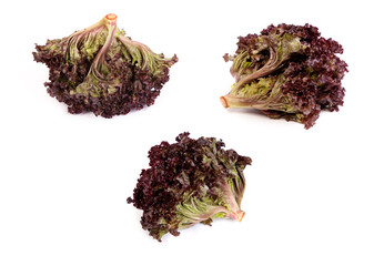 set of Fresh red Lettuce isolated on white