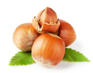 Ripe hazel nuts