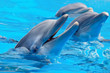 Three beautiful and funny dolphins