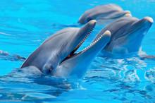 Drei schöne und lustige Delfine