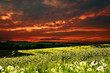 Dramatic sunset over hilly meadow, environmental backgrounds