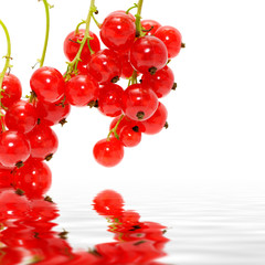 red currant in water on white