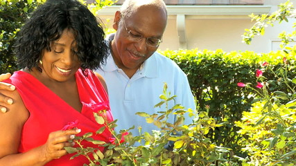 Contented African American Married Couple Gardening