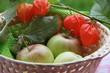 Äpfel im Körbchen neben Lampionblumen