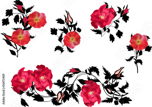 black and red brier flowers collection