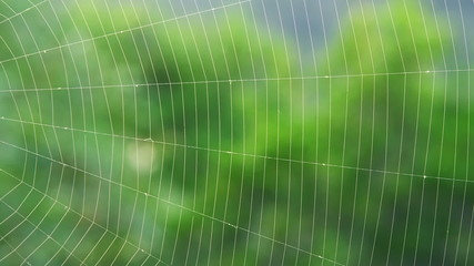 Spider web on a wind
