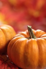 Close-up of pumpkin on utumn background