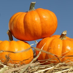 Close-up of pumpkins on straw.