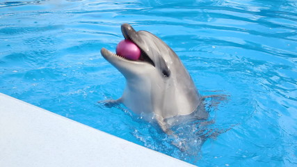 funny dolphin juggling balls