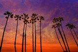 California palm trees sunset with colorful sky