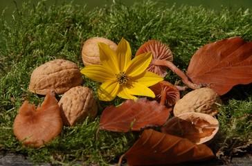 Sammlung von Naturmaterial im Herbst