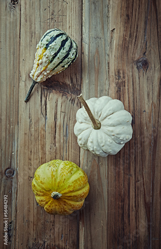 Still life with pumpkins. Autumn arrangement