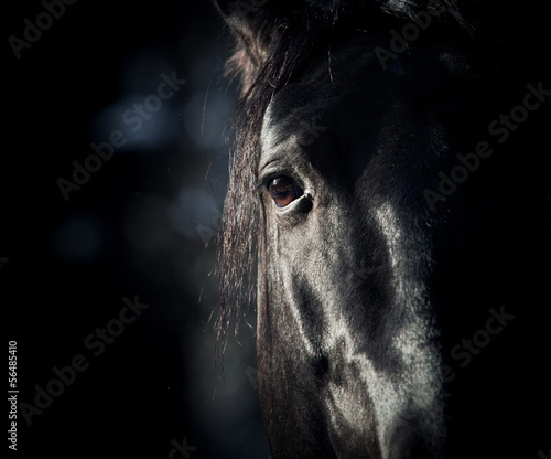 Fotobehang Paarden horse eye in dark