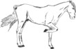 Vector scetch of a stand horse