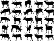 Set of 25 vector silhouettes of deer