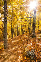 Forest footpath in the fall. Hayedo de Tejera Negra, Spain