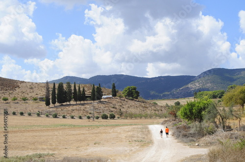 Pastoral Landscape with trees and hills, Israel