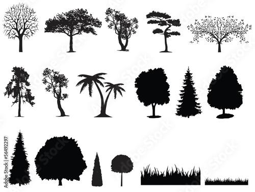 trees - 56492297