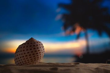 seashell in the sea , sunrise, dark light