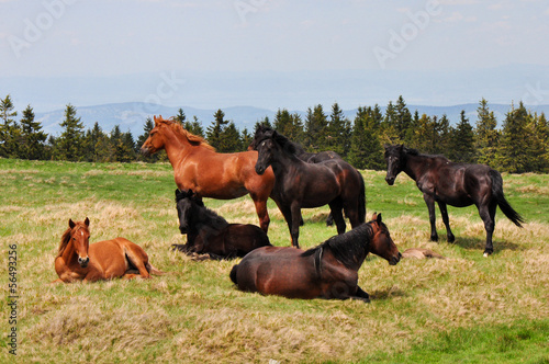 Batch of horses resting