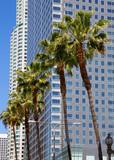 LA Downtown Los Angeles Pershing Square palm tress