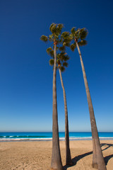 Newport beach California palm trees on shore