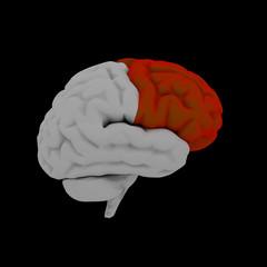 Frontal lobe - Human brain in side view