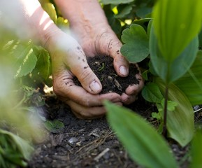 Female hands with soil working in garden