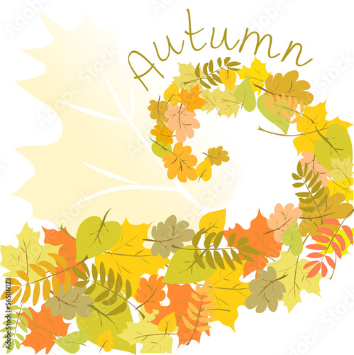 autumn background. leaves in a spiral shape