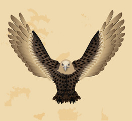 Vintage Eagle Vector Illustration