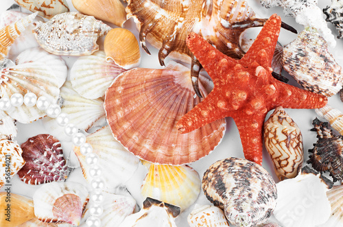 scallops collection