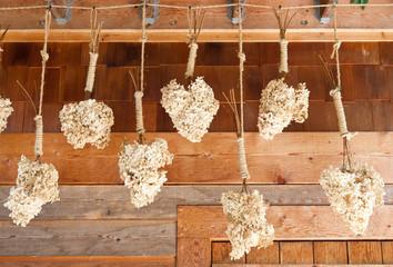 Dry hydrangea still life