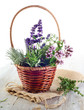 fresh herbs in basket