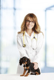 Veterinarian doctor and spaniel puppy