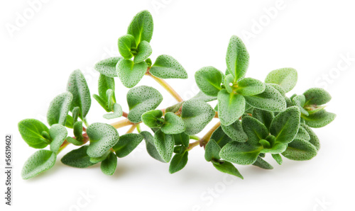Thyme isolated on white background. Macro